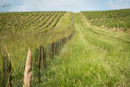 hedges-winery-buzet-agroforestry